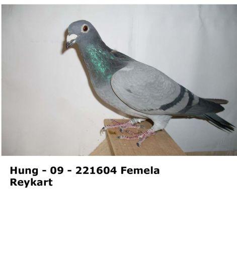 hung_-_09_-_221604.jpg