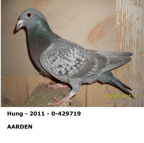 hung_-_2011_-_0_-_429719.jpg