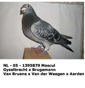 nl_-_05_-_1395879.jpg