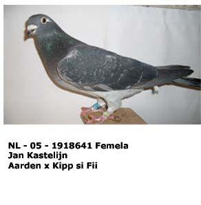 nl_-_05_-_1918641.jpg
